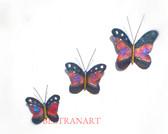 Butterfly-026