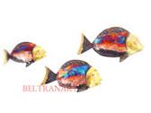 Fish-022