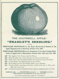 bramleys-seedling.jpg