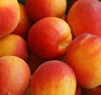 Divinity Apricot (dwarf)