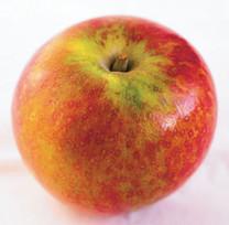Cox's Orange Pippin: catalogue description