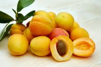 Storeys Apricot (dwarf)