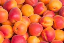 Rival Apricot