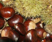 De Coppi Marone Chestnut
