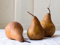 Beurre Bosc Pear (semi-dwarf)