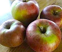 Brown's Apple (medium)