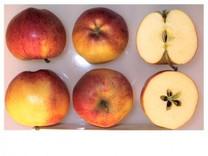 Gala Apple (stepover)