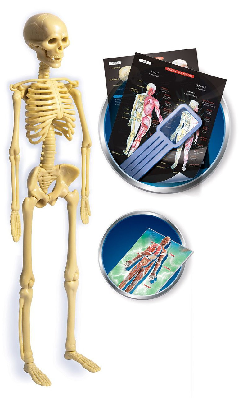 Educational Games Creative Toys Anatomy Lab 61252 Hobby Hunters