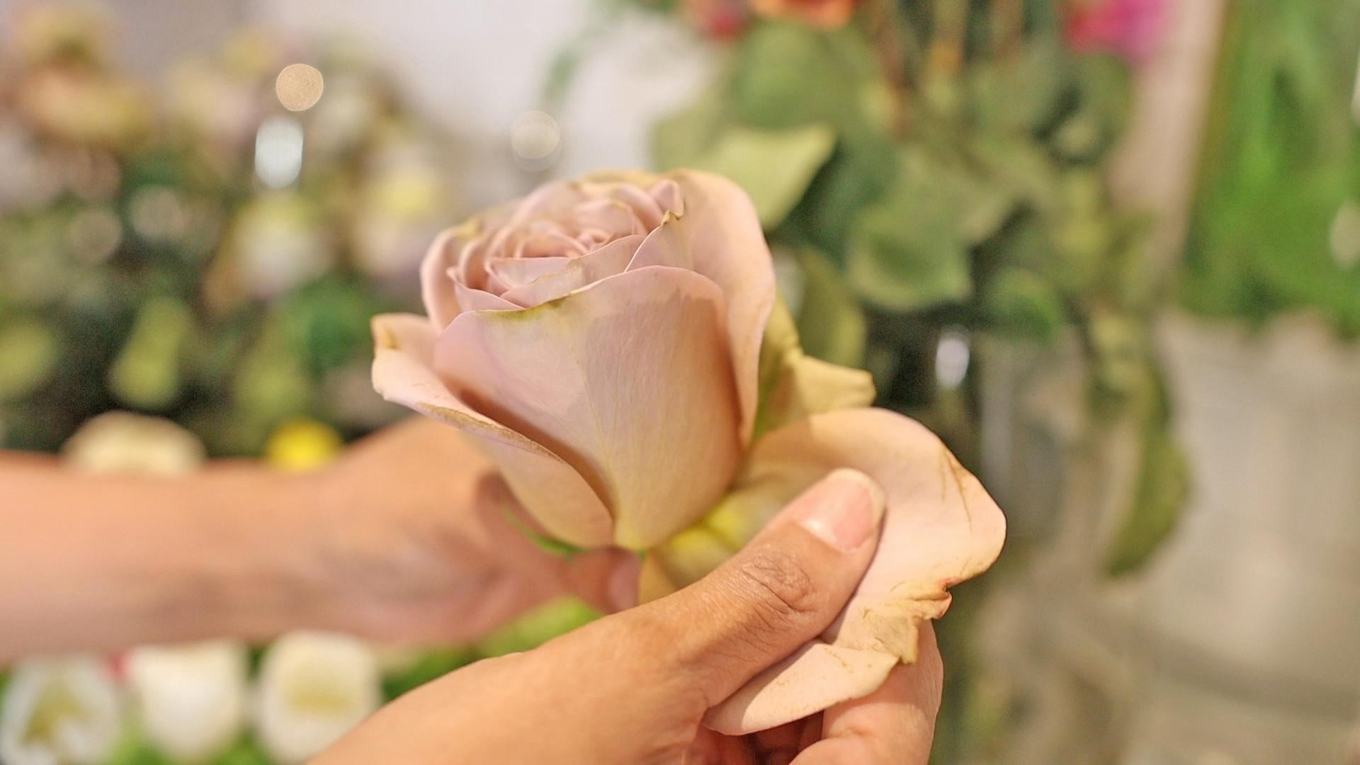 Pulling the bruised petals from a dusty pink rose