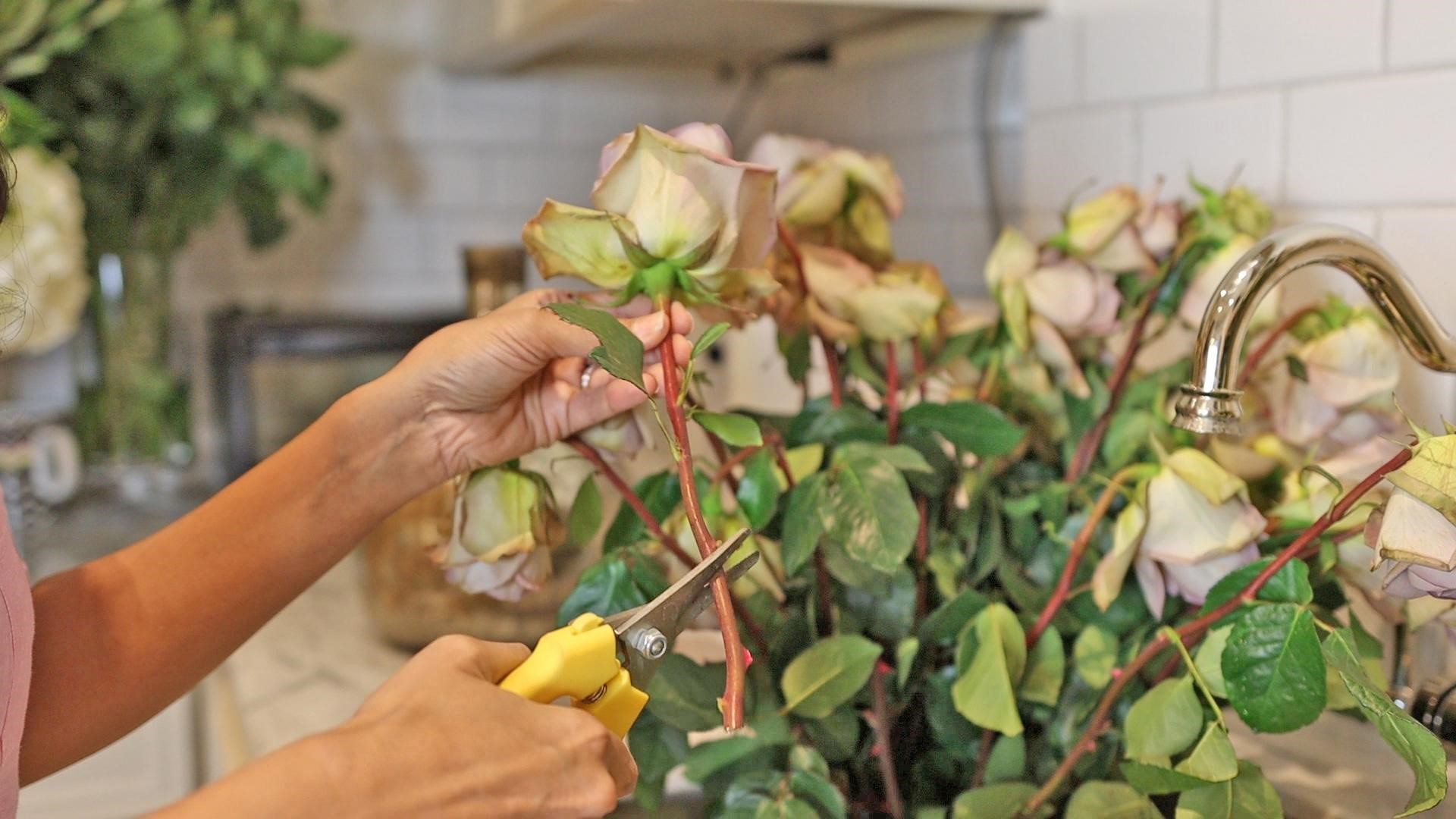 Trimming a bunch of roses at a diagonal angle with floral shears