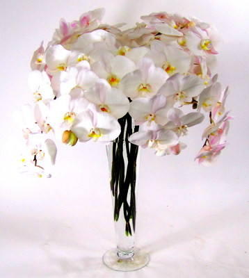 Pilsner Vase with Phaelonopsis Orchids