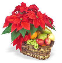 Poinsettia and Fruit basket