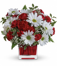 Red and white delight. A mix of red mini carnations and white daisies with a touch of babies breath arranged in a red cube.