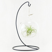 * SPECIAL * Hanging Air Plant Garden with Stand $29.99 REG. $39.99 (Local Delivery Only)