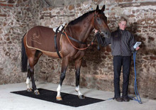 Horse Weigh Scale Badminton
