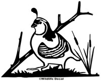 Quail Hunting Decals