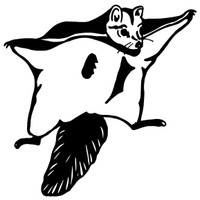 Flying Squirrel Decal WD#170 Wildlife Hunting Window Stickers