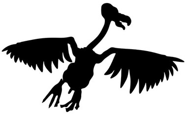 Buzzard Decals and Buzzard Stickers. Personalize any of our bird decals with your choice of text, color and size.These are perfect for trucks, cars, windows, gun cabinets, 4-wheelers, boats, mailboxes or any clean semi-smooth surface. Show your passion for Buzzard. Free Shipping on all orders over $25.00