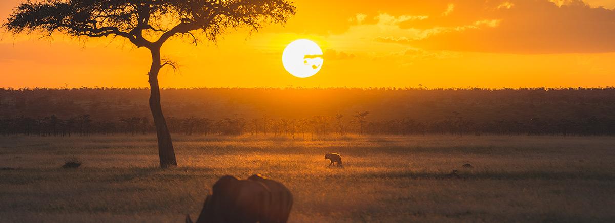 Kenyan Animals Preying At Sunset