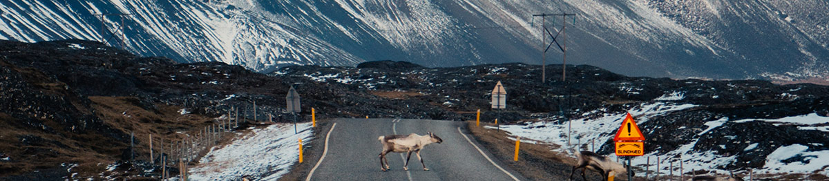 Travelling Around Iceland, Rare Spottings