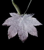 Full Moon Maple Leaf Ornament - Silver