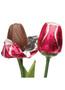 Solid Milk Chocolate Tulip