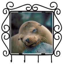 Sea Lion Metal Key Holder