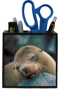 Sea Lion Wooden Pencil Holder