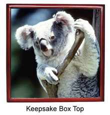 Koala Bear Keepsake Box