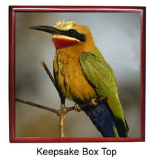 Bee Eater Keepsake Box