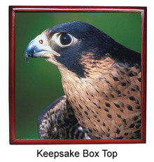 Falcon Keepsake Box
