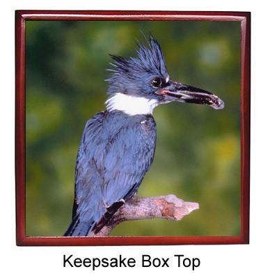 Belted Kingfisher Keepsake Box