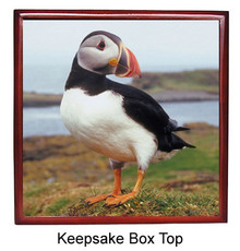 Atlantic Puffin Keepsake Box
