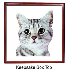 American Shorthair Cat Keepsake Box