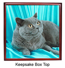 British Shorthair Cat Keepsake Box