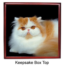 Persian Cat Keepsake Box
