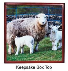 Lamb Keepsake Box