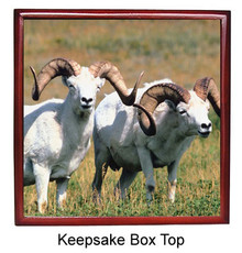 Big Horned Sheep Keepsake Box