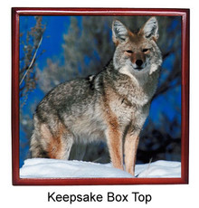 Coyote Keepsake Box