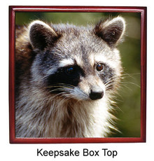 Raccoon Keepsake Box