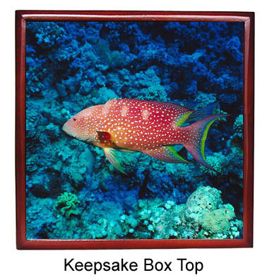 Grouper Keepsake Box