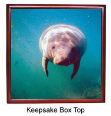 Manatee Keepsake Box