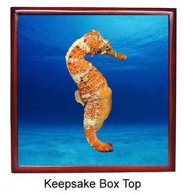 Seahorse Keepsake Box