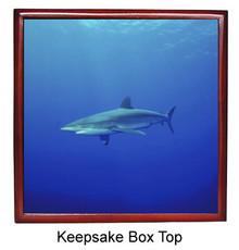 Shark Keepsake Box