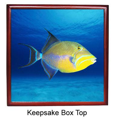 Triggerfish Keepsake Box