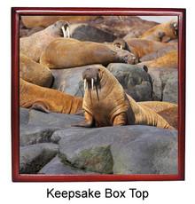 Walrus Keepsake Box