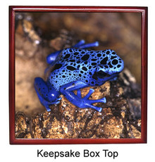 Blue Frog Keepsake Box