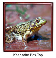 Green Frog Keepsake Box