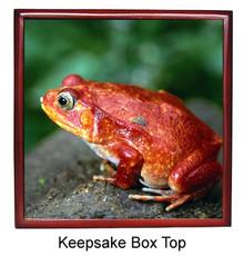 Tomato Frog Keepsake Box