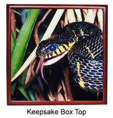 Mangrove Snake Keepsake Box